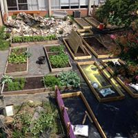picture showing the aquaponic system/pond