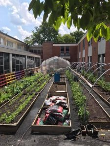 picture showing the raised garden beds and green house